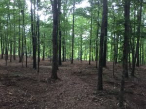 Bobcat Services Land Clearing Mulching