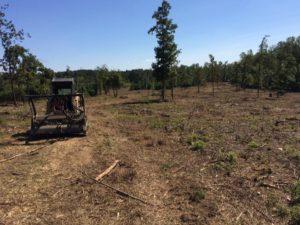 Land Clearing Mulching